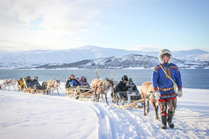 Reindeer Experience, Sami Culture, and Short Reindeer Sledding Tour from Tromso