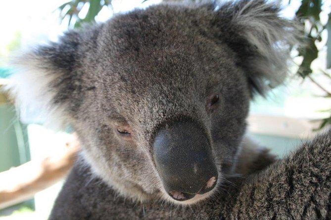 - Peninsula de Mornington, AUSTRALIA