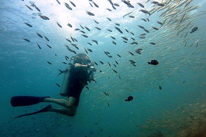 Diving at Koh Chang, daytrip with 2 dives