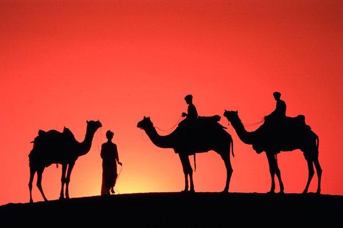 Sunset Camel Ride Tour in Marrakech Palm Grove
