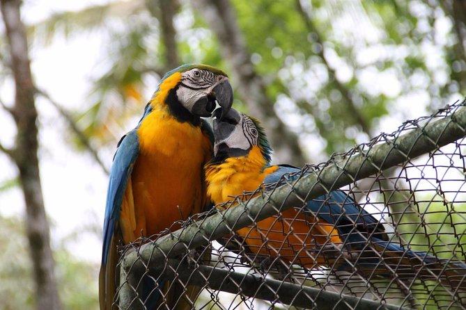 Ingresso para o Parque Zoobotanico de Brusque