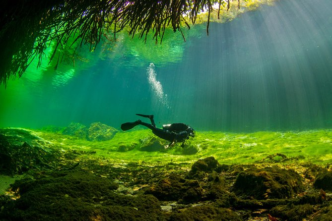 Cenote Diving for First-Time Divers and for Refresher Dives in Tulum