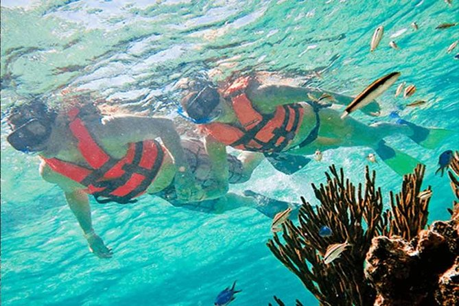 Half-Day Snorkeling Adventure in Puerto Morelos