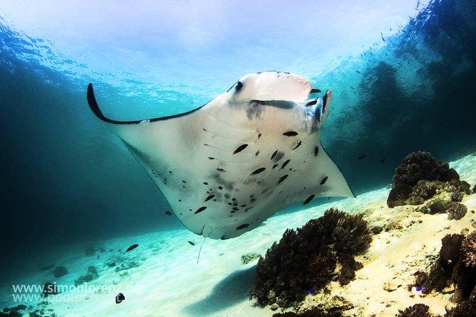 Scuba Dive Komodo National Park - 3 dives (certified divers)