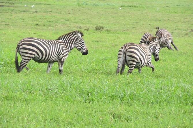Amazing 4 Days Camping Safari at Serengeti National Park