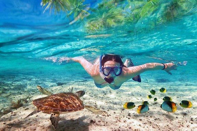 Snorkelupplevelse i Cancun med Sunken Boat