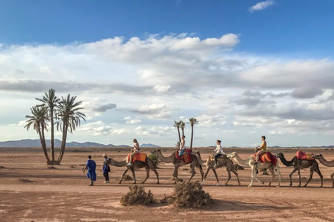 Top Activities: Sunset Camel Ride in the Palm Grove of Marrakech