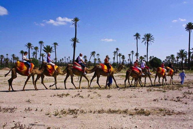 tour de chameau avec une pause thé entouré de palmiers au coucher du soleil