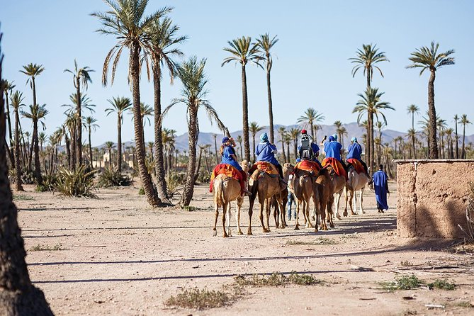 Sunset Camel Ride In Marrakeh Palm Grove
