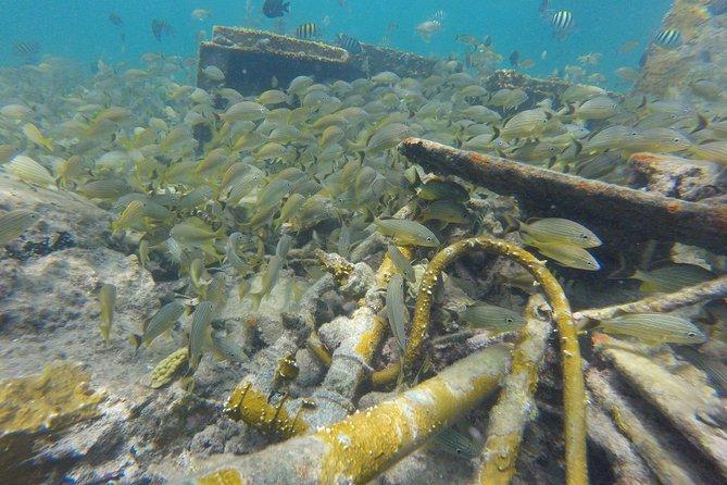 Stingray and Multi-Reef Snorkeling Eco-Tour, Freeport, BAHAMAS