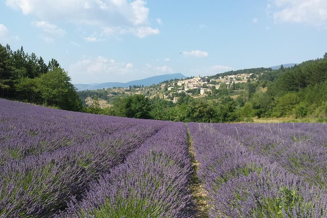 Full day lavender tour Luberon and Sault