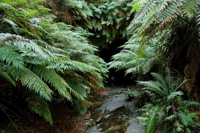 Sydney Glow Worm Tunnel and Lost City Small-Group Day Trip photo 1