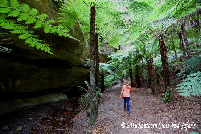 Sydney Glow Worm Tunnel and Lost City Small-Group Day Trip photo 2