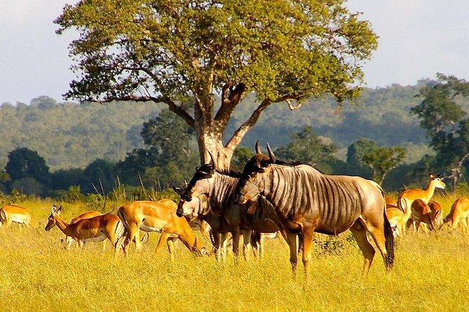 Full Day Safari Tour of Ngorongoro Crater