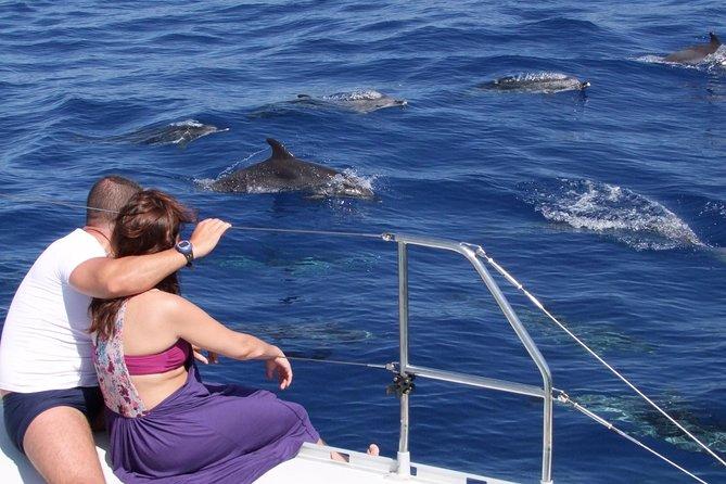 Excursão em 4x4 com teto aberto pelos incríveis penhascos e vales de Skywalk + observação de golfinhos