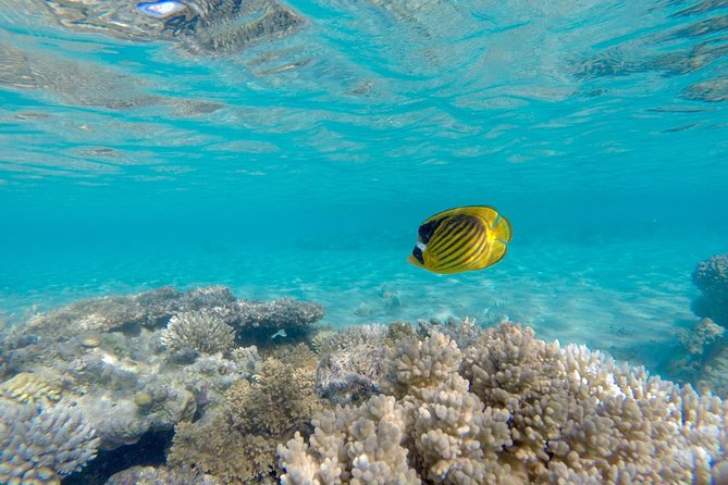 Snorkeling Trip to Giftun Island from Hurghada photo 3