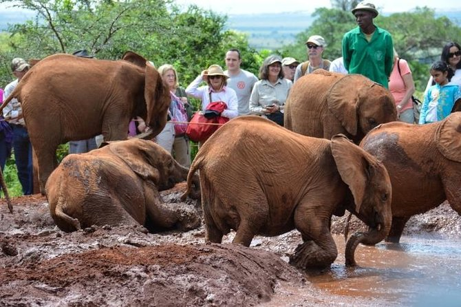 Private Full-Day Elephant Orphanage and Giraffe Center Tour from Nairobi