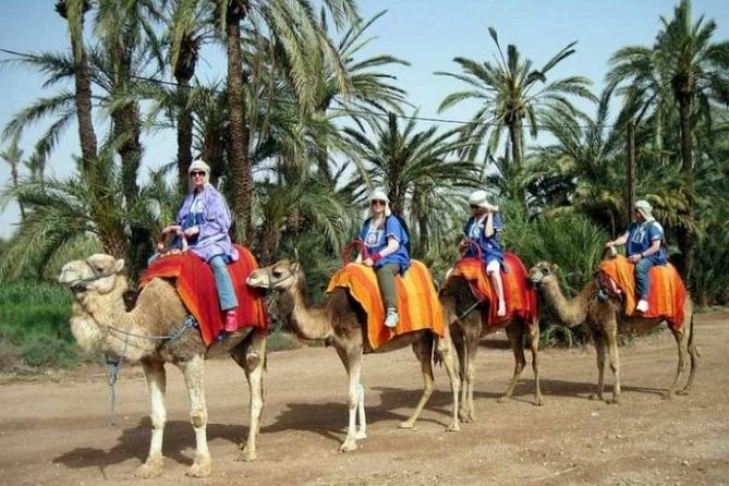 Marrakech Half-Day Camel Ride in Palm Grove