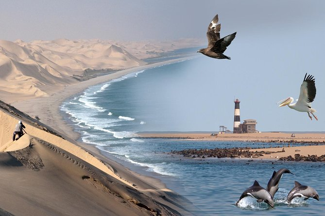Marine Desert Adventure Full Day Tour from Walvis Bay