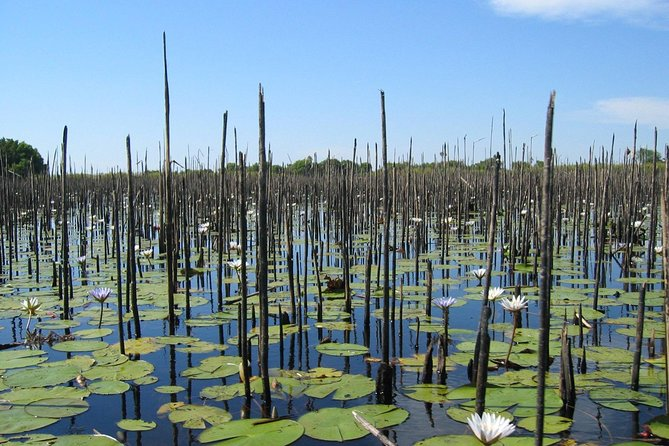 Half-Day Tigre Delta Tour from Buenos Aires including Lunch
