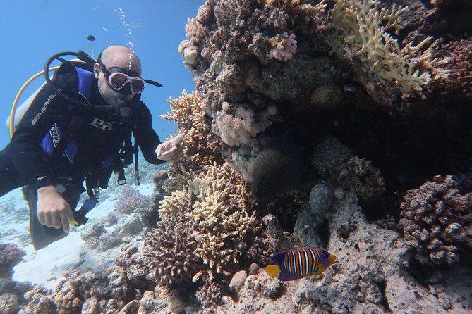 Hurghada Daily Scuba Dive Trip