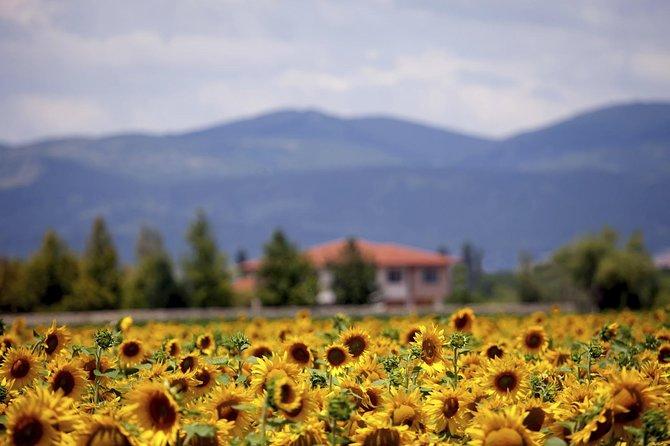 Macerata: classic wine tasting in a luxurious estate