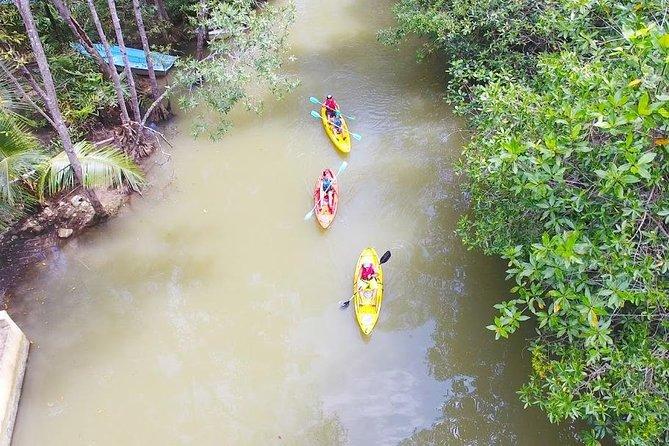 Damas Island Mangrove Tour from Quepos