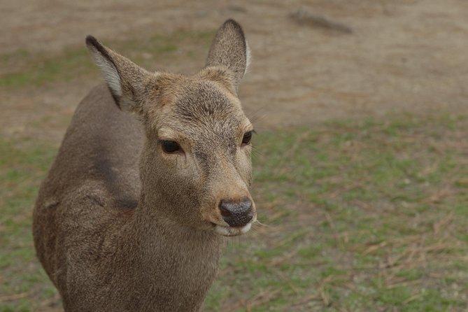 Discover Traditional Nara Walking Tour (Full day)