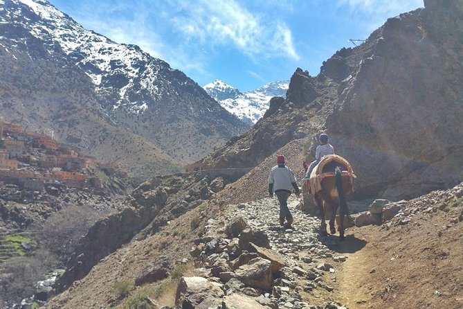 Camel & Hike Atlas Mountains