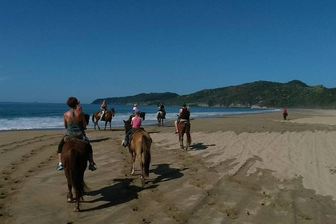 Horseback Riding on the Beach and Through a Coconut Plantation