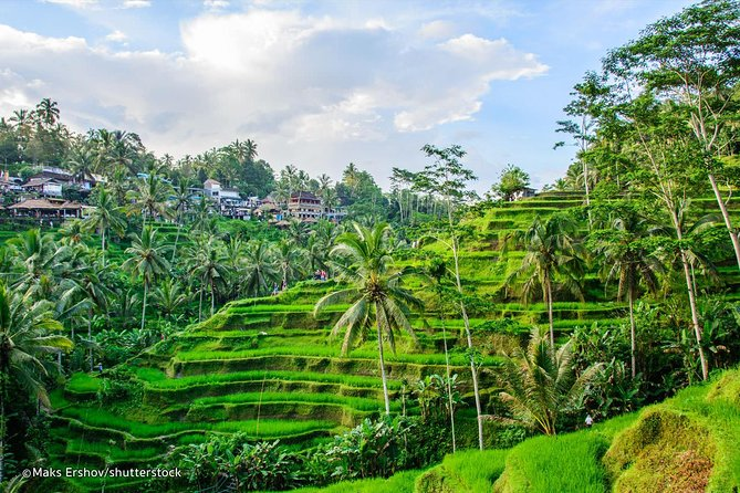 Ubud Tour - Best of Ubud