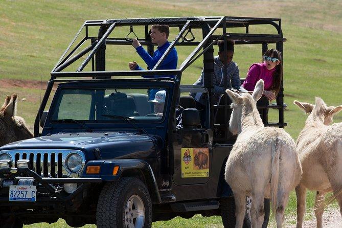 Jeep Bison Safari Custer Park