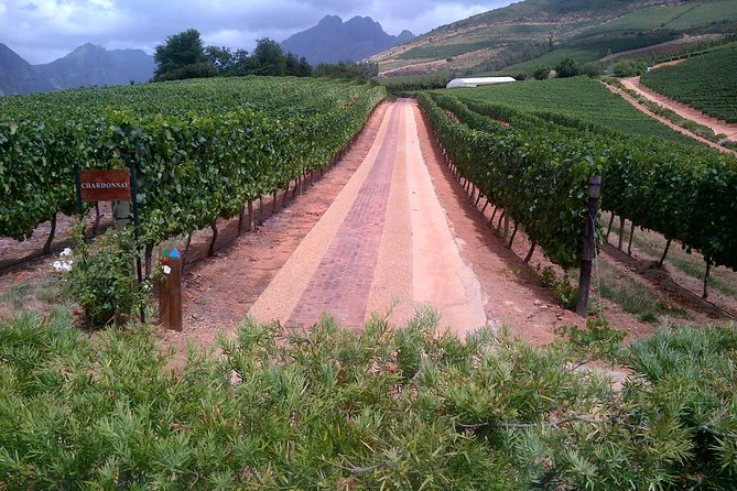 Full Day Wine Safari and Tasting with Franschhoek Motor Museum from Cape Town