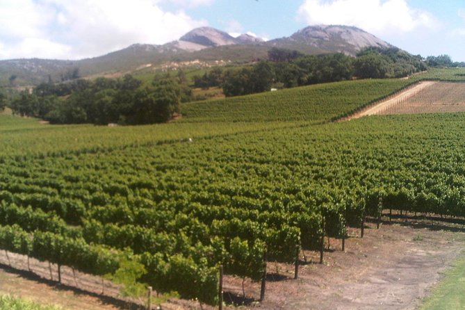 Private Cape Winelands Guided Day Tour from Stellenbosch OR Franschhoek OR Paarl photo 1