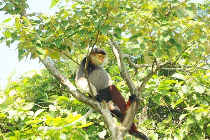 Excursion d'observation de la faune de Son Tra d'une demi-journée à Da Nang