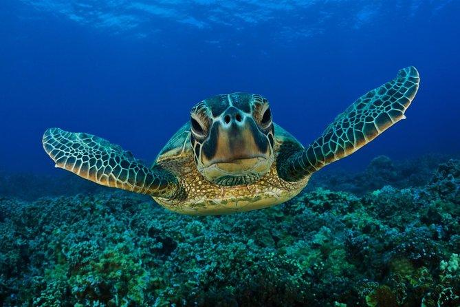 Dalyan Bus Trip to Caunos Ancient City- Turtle Beach and Sultaniye Mud Bath