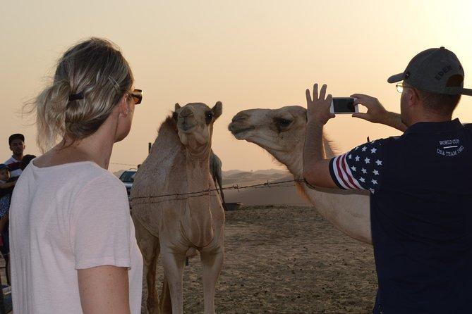 Morning Camel Trekking Dubai Tours for 2 to 14 people