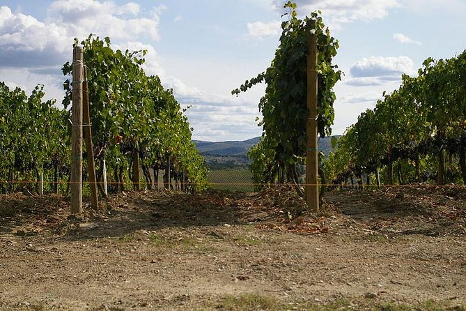 Shore Excursion from Livorno to Chianti area with Wine Tasting & Lunch