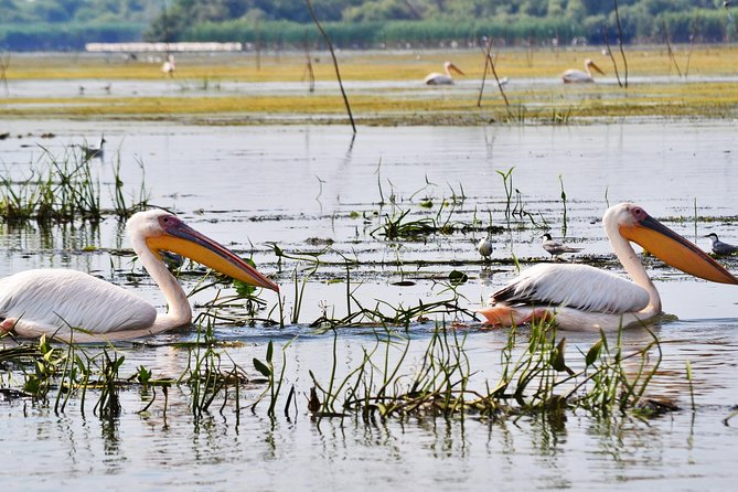 Danube Delta Private 3-Day Birdwatching Tour