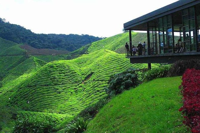 2Days 1Night Cameron Highland and Penang Island Private Tour from Kuala Lumpur