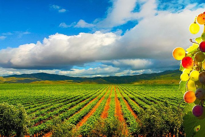 Guadalupe Valley Wine Route Tour in Baja California