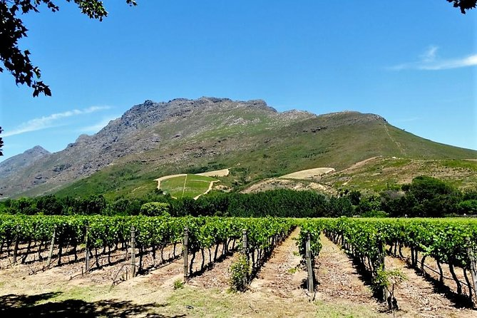 Stellenbosch Winelands Guided Half Day Cycle Tour photo 1