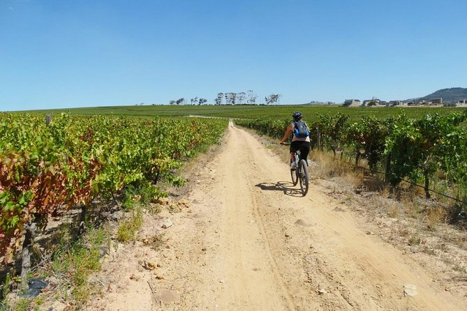Stellenbosch Winelands Guided Half Day Cycle Tour photo 2