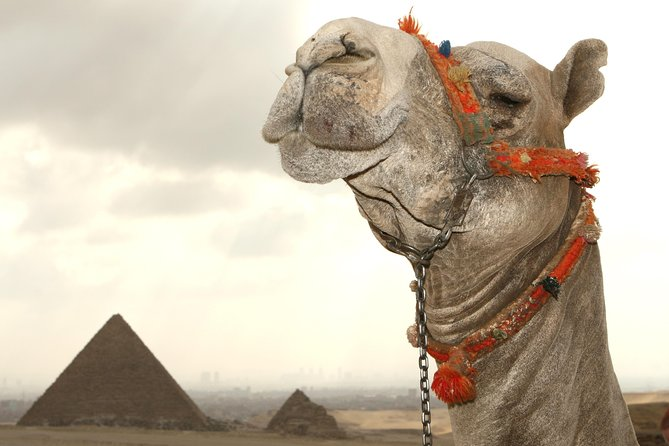 Private Day tour to Pyramids With Nile Cruise Lunch from Alexandria Port
