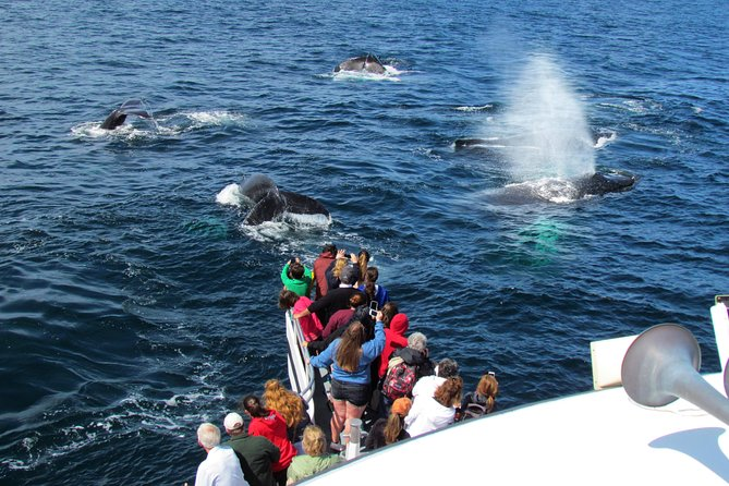 Excursión de un día a Plimoth Plantation, tour de observación de ballenas desde Boston