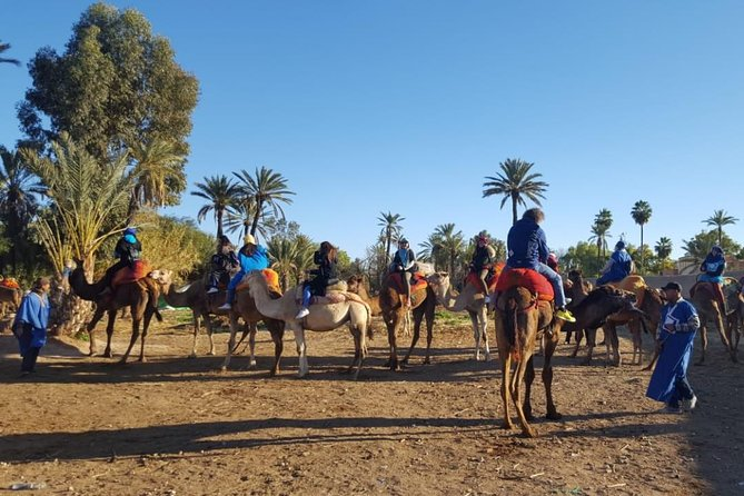 Camel Ride Marrakech in the Palm Groves