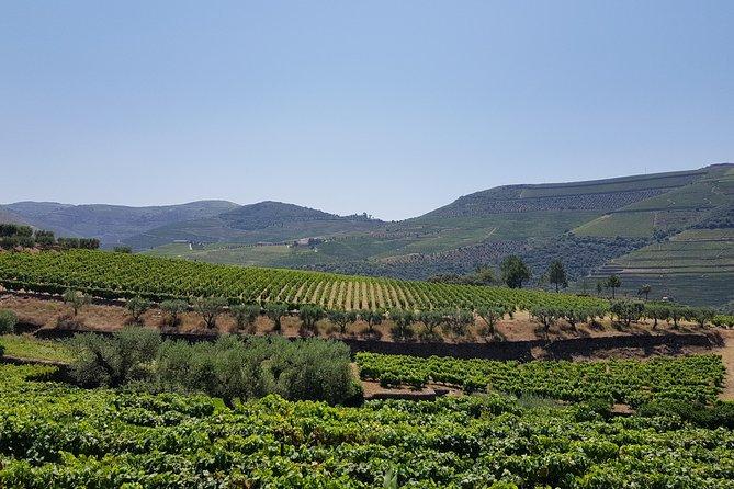 Excursão por Vale do Douro e visita a dois vinhedos, cruzeiro fluvial e almoço na vinícola