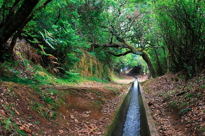 Levada Walk from Ribeiro Frio to Portela