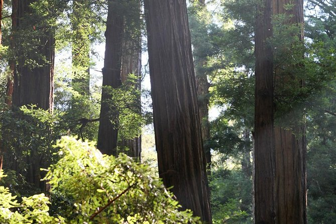 Redwoods of Marin and Mt. Tamalpais Walking Tour with Local Guide photo 4