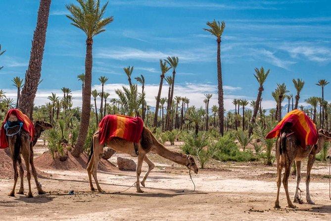 Marrakech kamel trek